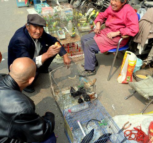 verslas, žmonės, pora, pardavėjas, pardavėjas, senyvo amžiaus, paukščiai, Kinija, Zhengzhou, paukščių pardavėjas