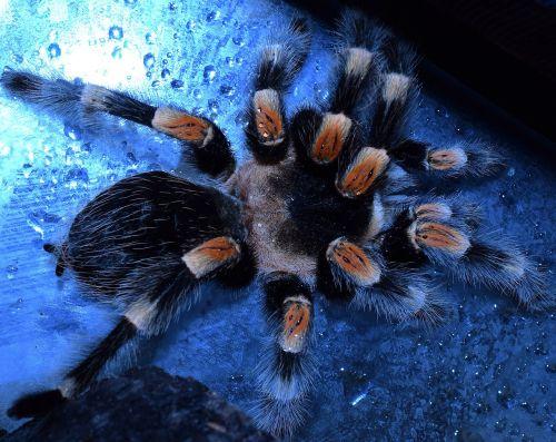 bird spider-legs spider legs spider