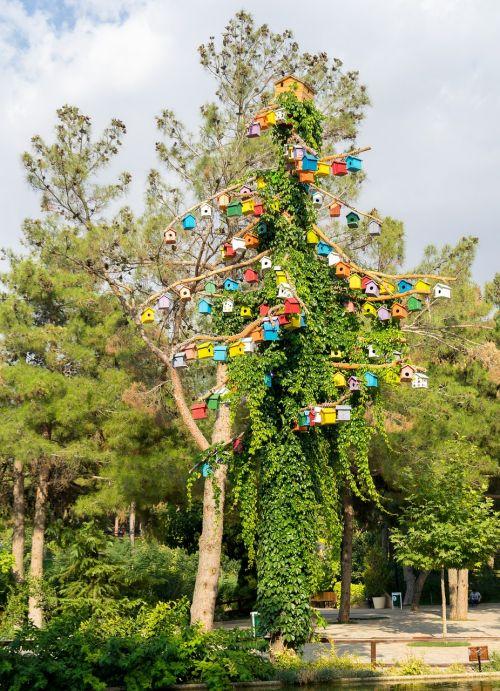 bird tree bird tree
