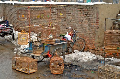 Bird Vendor