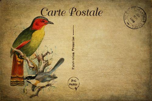 Bird Vintage Postcard
