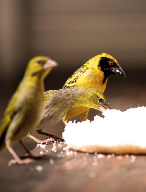 bird watching birds food