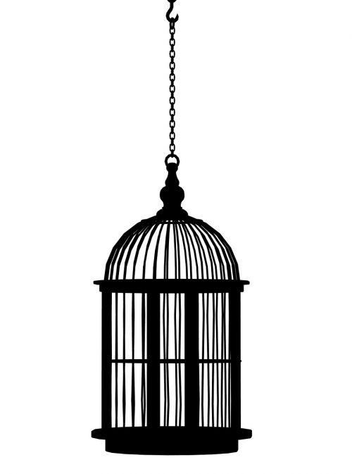 birdcage cage bird cage