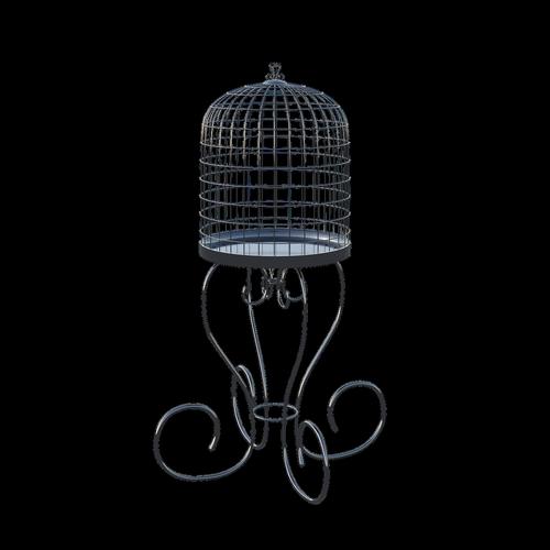 birdcage  cage  birds