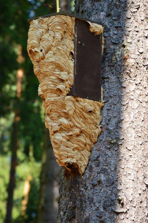 birdhouse hornet hornet's nest