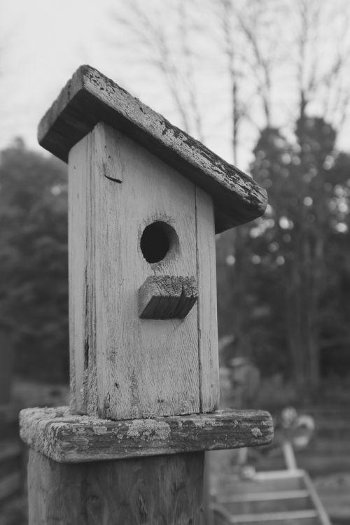 birdhouse outdoor nature