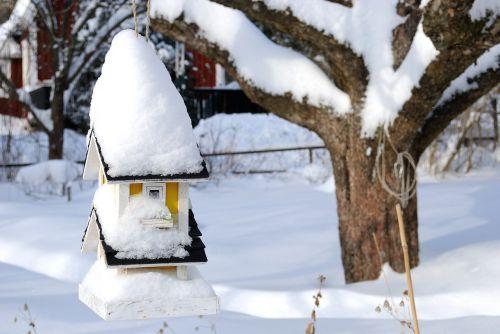 birdhouse winter tribe