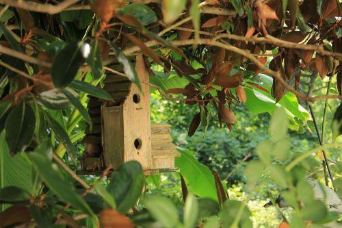 birdhouse bird house wooden
