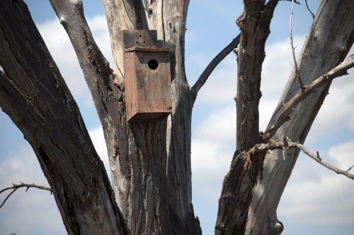 Birdhouse In Bare Tree