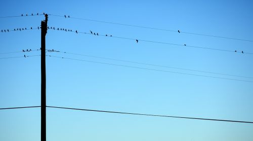 birds telephone wire perched