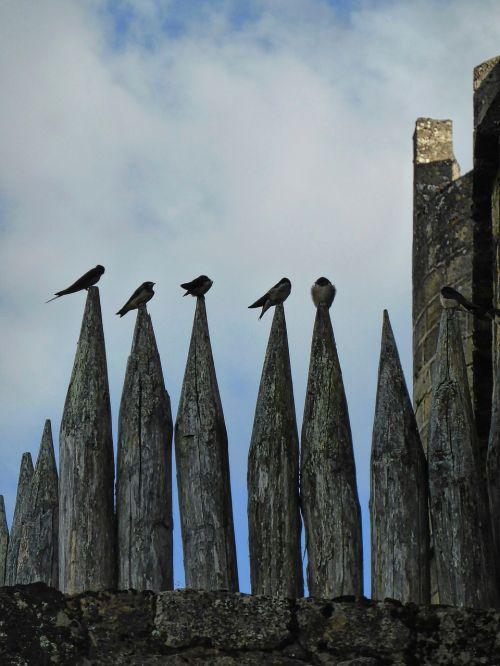 birds resting pinnacle