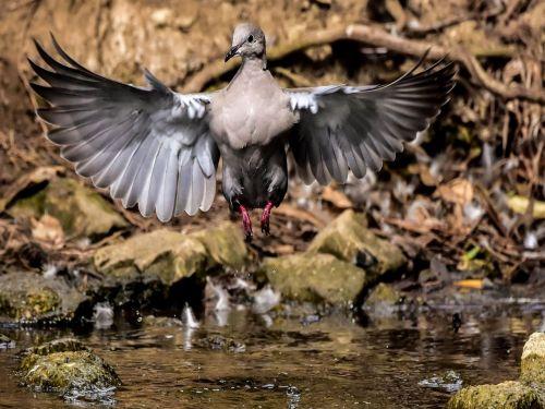 birds beauty ecology