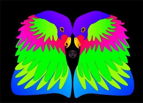 birds colorful love