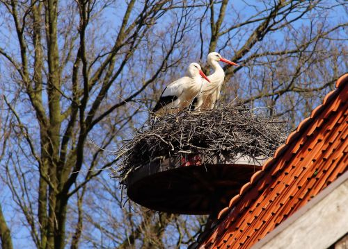 birds storks animals