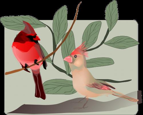 birds singing birds oscine birds