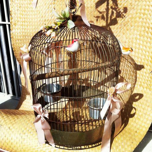 birds cage freedom