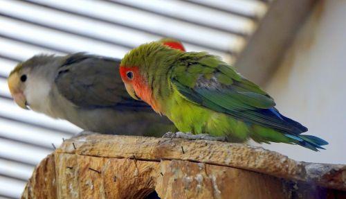 birds tropical tropical bird
