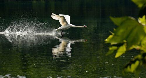 birds rivers animals