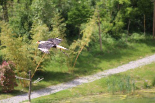 birds flight hover