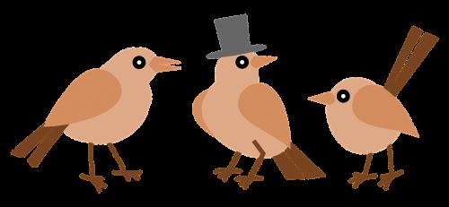 birds animals vintage