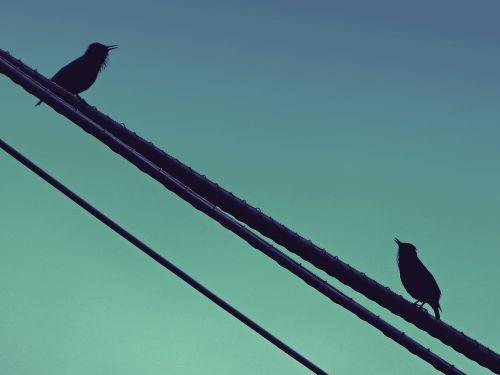 birds singing starling