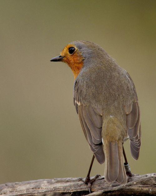 birds fauna tuscany