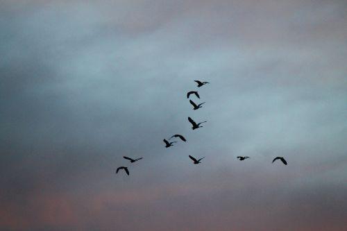 birds high fly