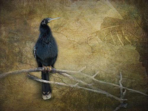 birds wildlife artistry