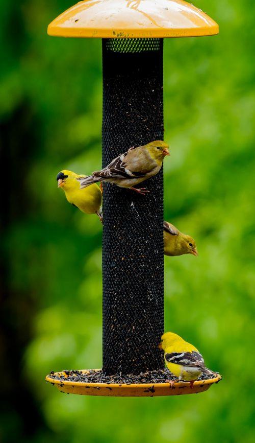 birds feeder wild