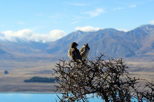 birds nature outlook