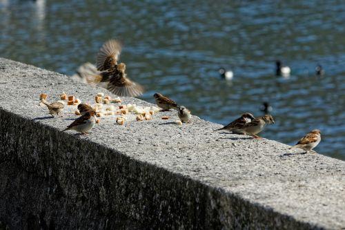 birds lake water