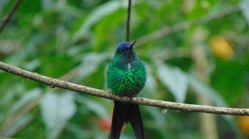 birds nature zoo