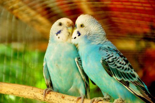 birds animal pet