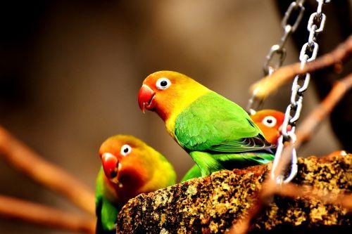 birds parrots colorful
