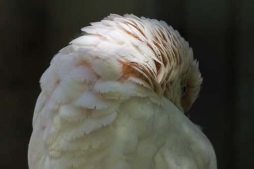 birds colored feathers nature