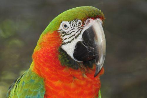 birds nature pet