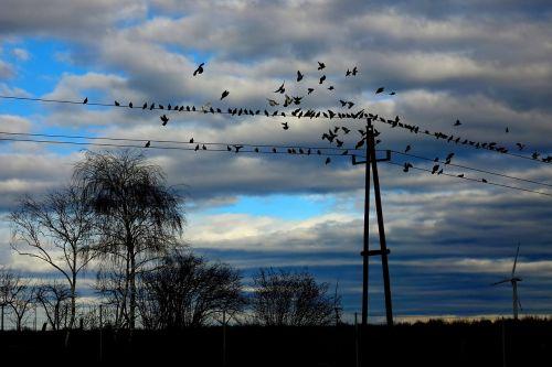birds pigeons fly