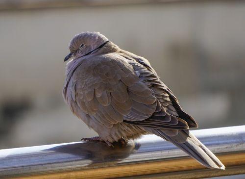 birds nature animalia