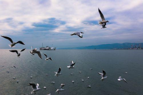 birds seagull nature