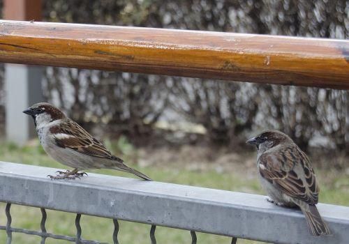 birds beggars bold