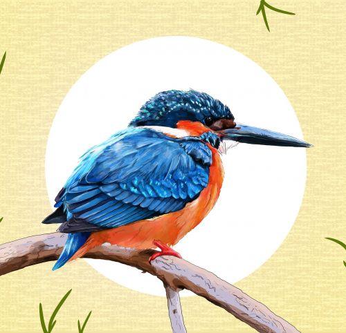 birds pity wildlife