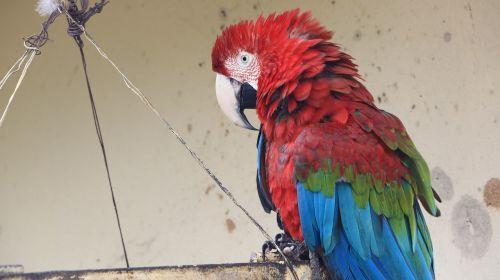 birds psittaciformes pen