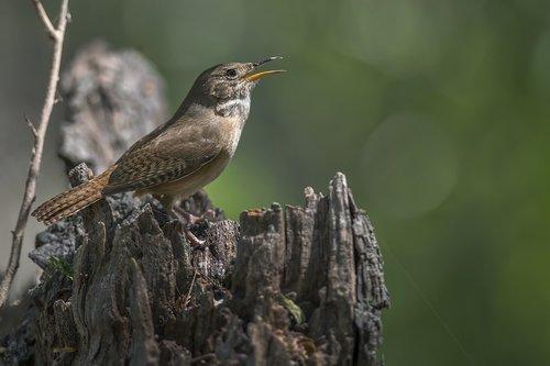 birds  wildlife  nature