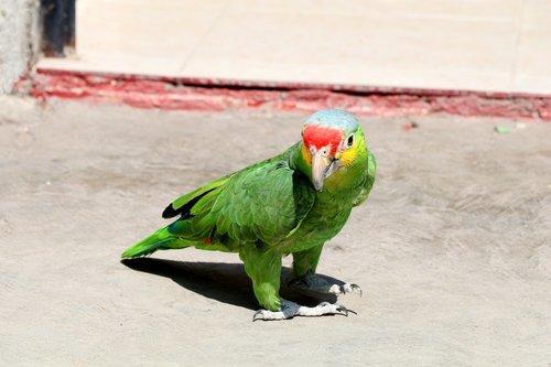 birds  animalia  wild life