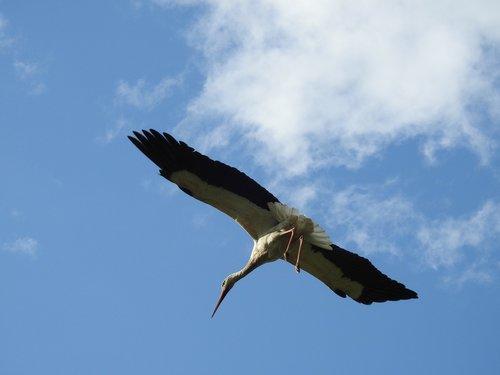 birds  nature  sky