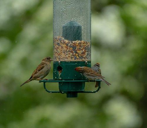 birds  bird feeder  feeder