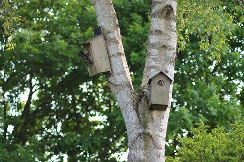 birds  garden birds  natural