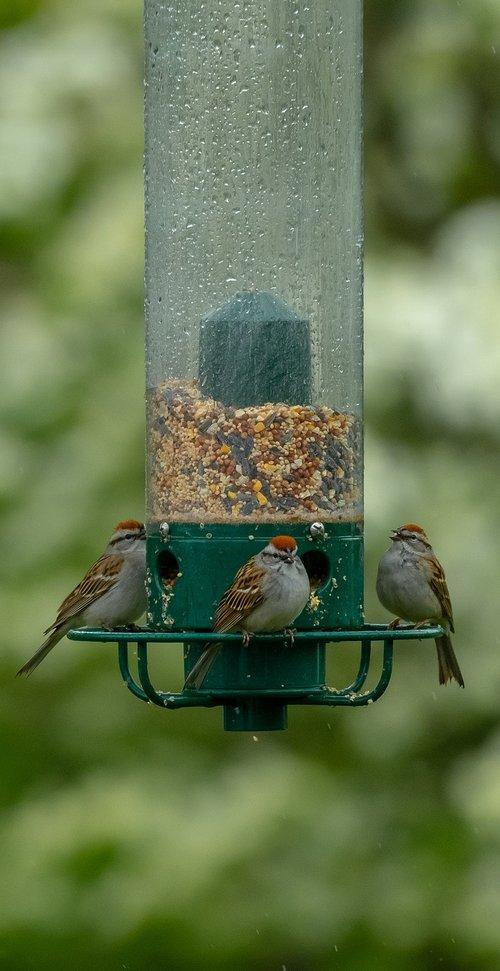 birds  feeder  bird feeder
