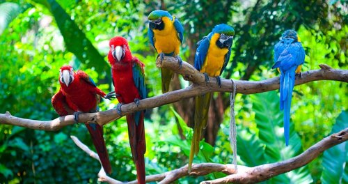 birds  nature  colorful