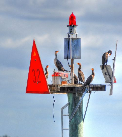 birds buoys animal